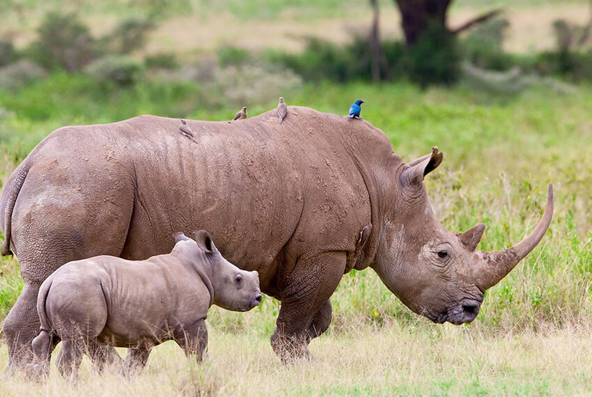 Rhino International's